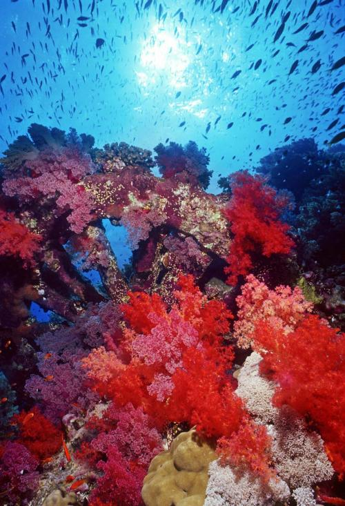Radiant Soft Corals